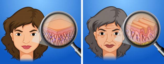 Estrogen ảnh hưởng đến da như thế nào? 1